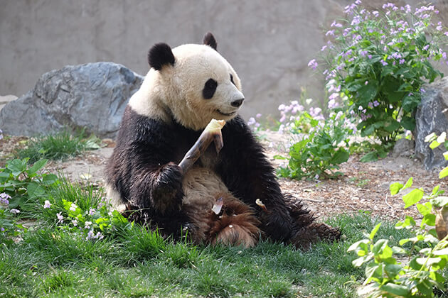 Beijing Zoo - a must see to visit in China tour package
