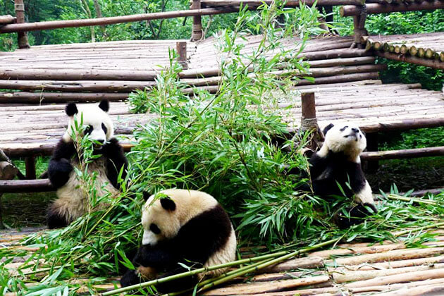 Chengdu Panda Conservation Center