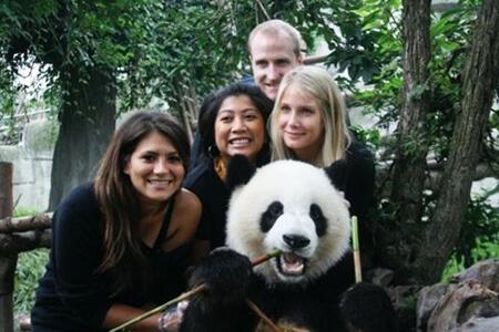China Panda Chengdu Tours