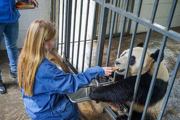 Dujiangyan Panda Base - Best Place for Volunteering