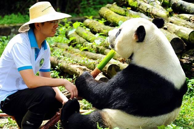 Dujiangyan Panda Base in Chengdu
