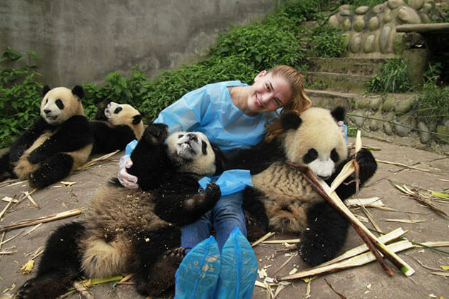 Experience Giant Panda Breeding in China Family Tour