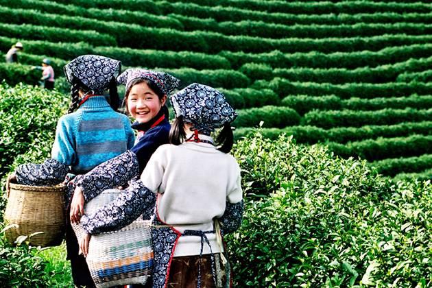 Experience Meijiawu Tea Village in China