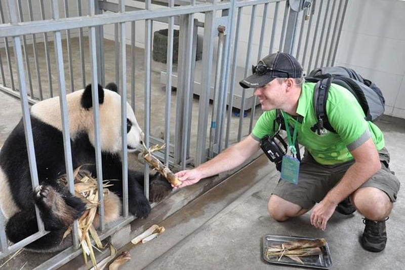 How to Volunteer with Giant Pandas in Chengdu