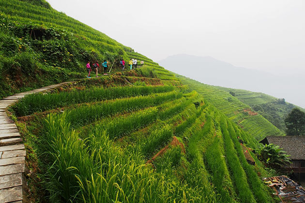 Longji Rice Terraces hiking from China tour