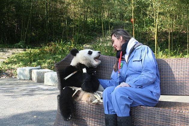 Panda Keeper Program from China Panda tour