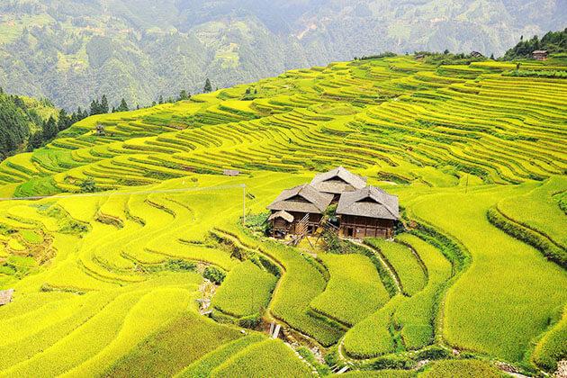 Scenic view of Longji Terraced Rice Fields