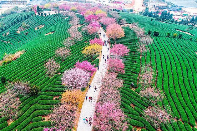 Spring time in China tours