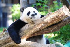 Wolong In-depth Panda Tour - 4 Days