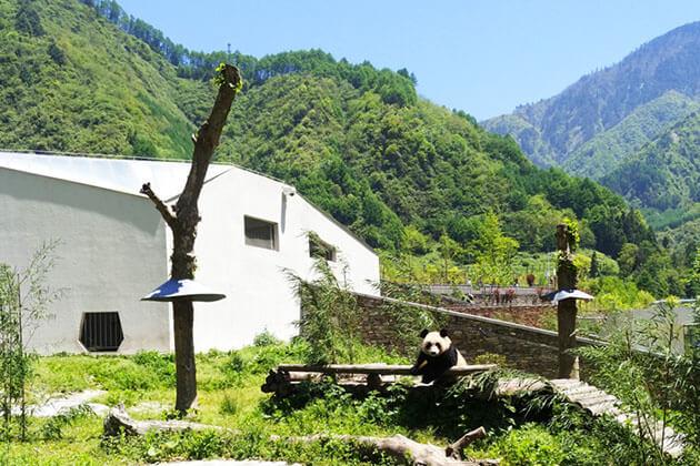Wolong Panda Center-best place in China Panda tour