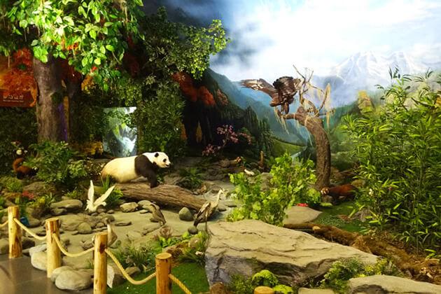 explore Wolong Giant Panda Museum in Chengdu Panda Tour