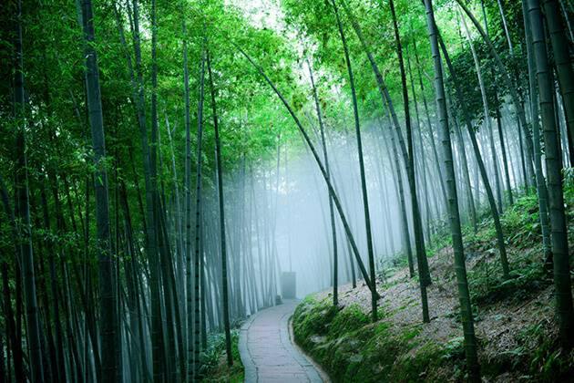 visit Sichuan Bamboo Sea during China tour package