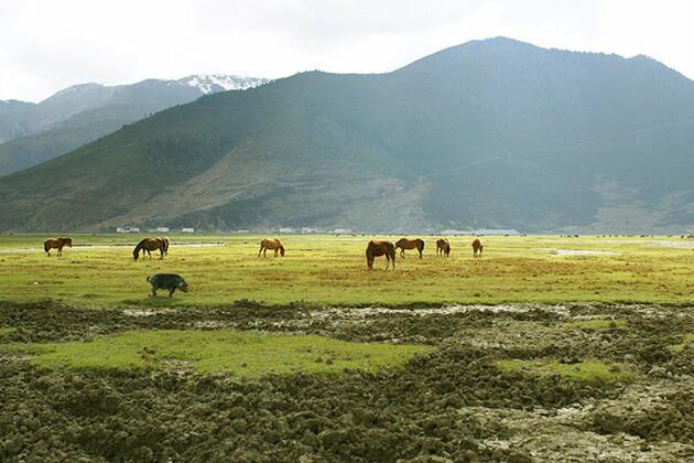 visitors of China Local Tour visit Napa Lake Nature Reserve